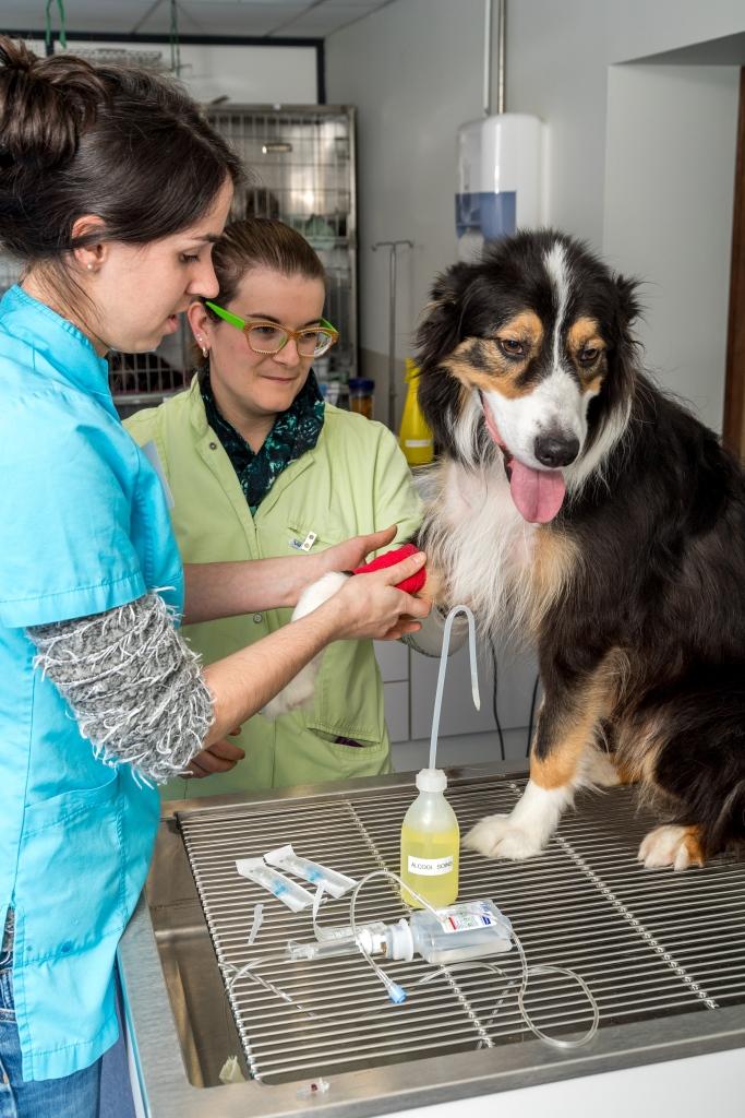 vétérinaire Saint-Genis