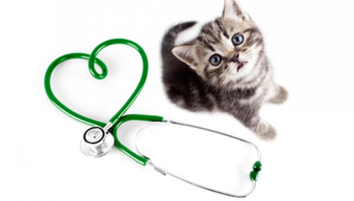 http://www.onevet.fr/wp-content/uploads/2015/12/Chat-stethoscope.jpg