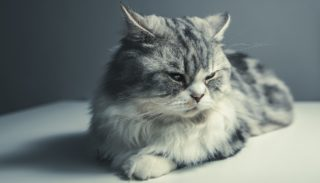 http://www.onevet.fr/wp-content/uploads/2015/12/cat-1897224_1920-e1498060638942-320x183.jpg