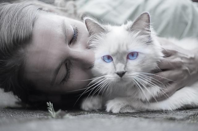 cat-1423844_640.jpg