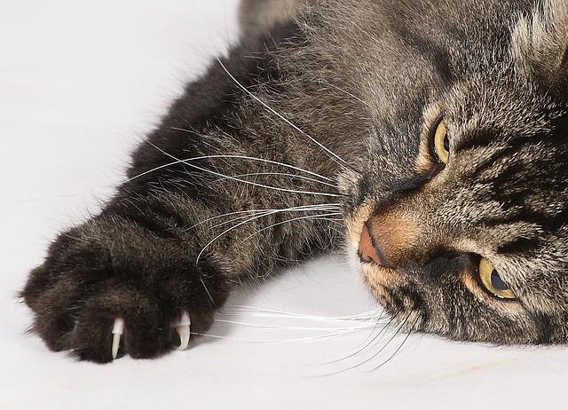 cat-2943414_640.jpg